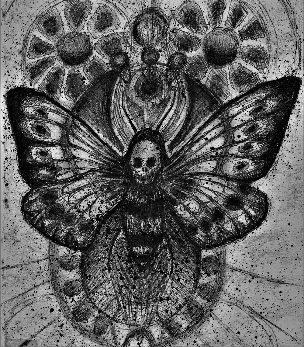 (Death head Moth) pen on paper