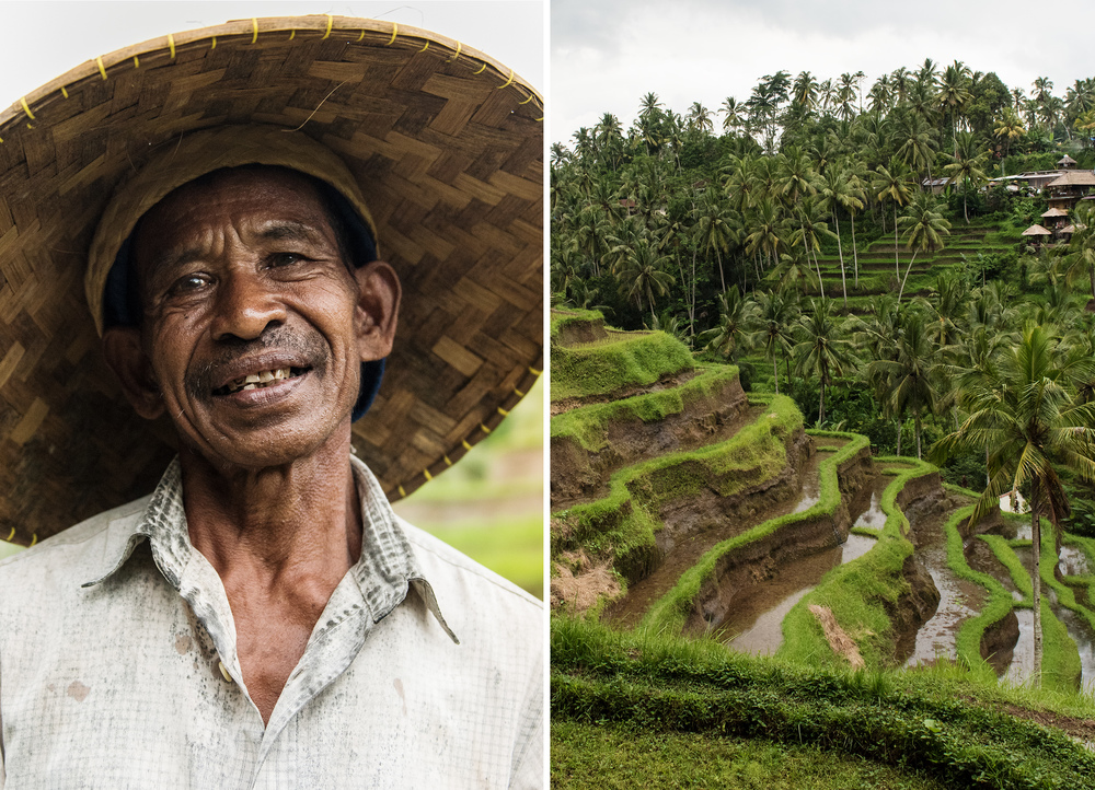 bali-rice-field.jpg