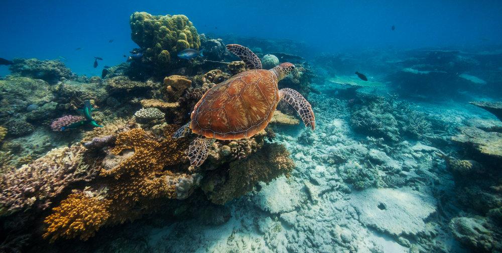 underwater-turtle-1.jpg