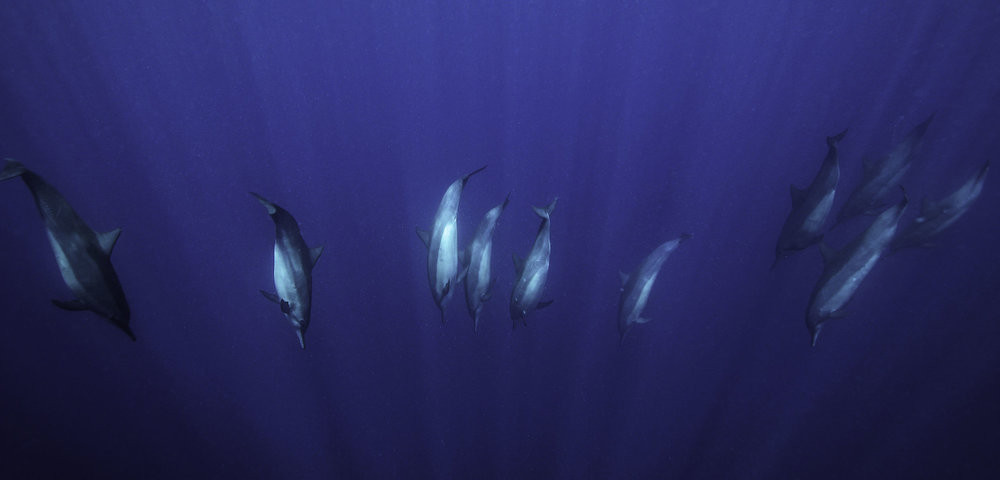 dolphins-great-barrier-reef.jpg