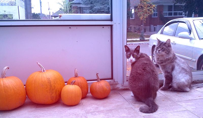 cats_oct2013.jpg