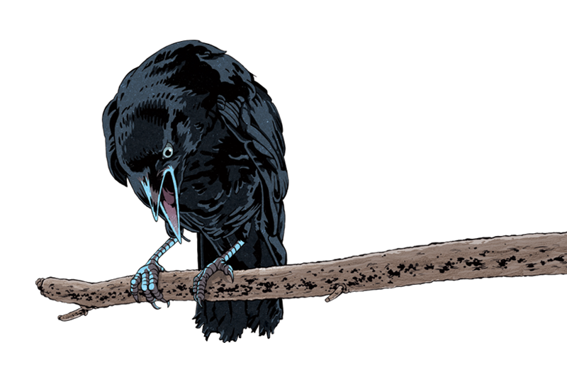raven5.png