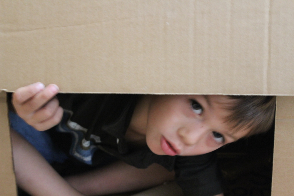 cardboard11.jpg