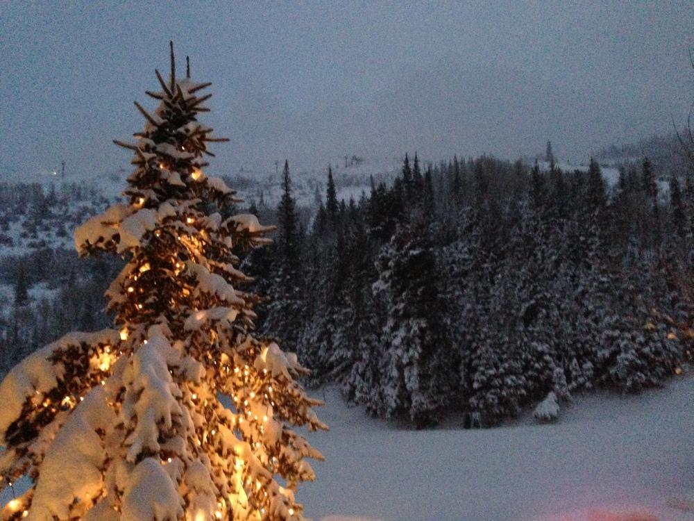lit tree dusk st regis.JPG