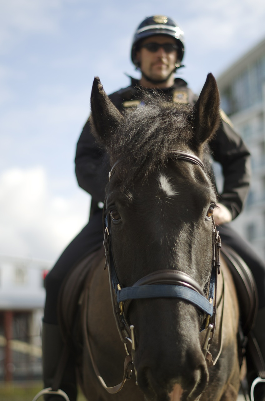 Portland mounted police.jpg