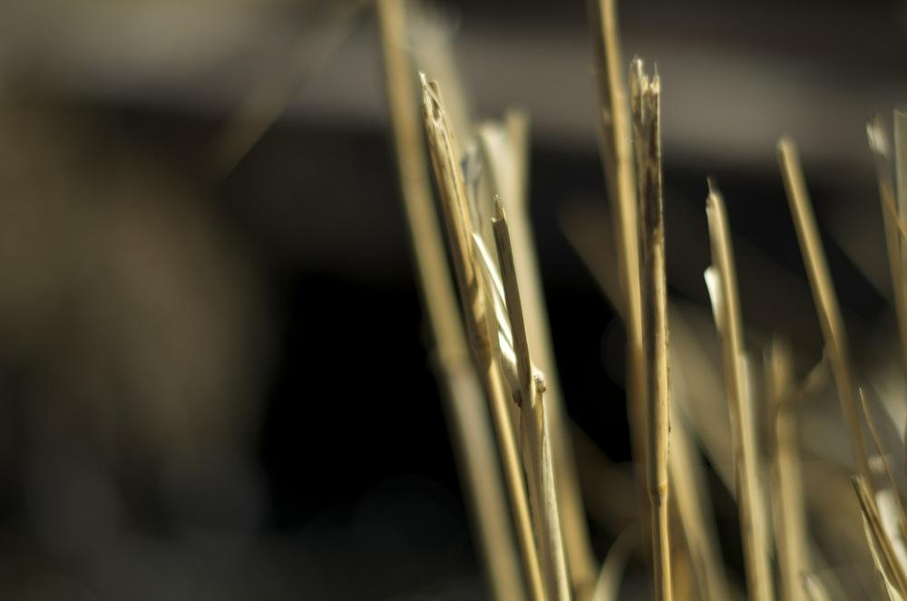 Grain stalks.jpg