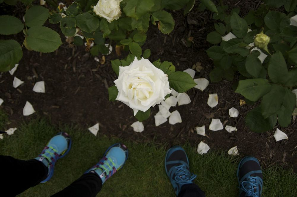 feet under white rose