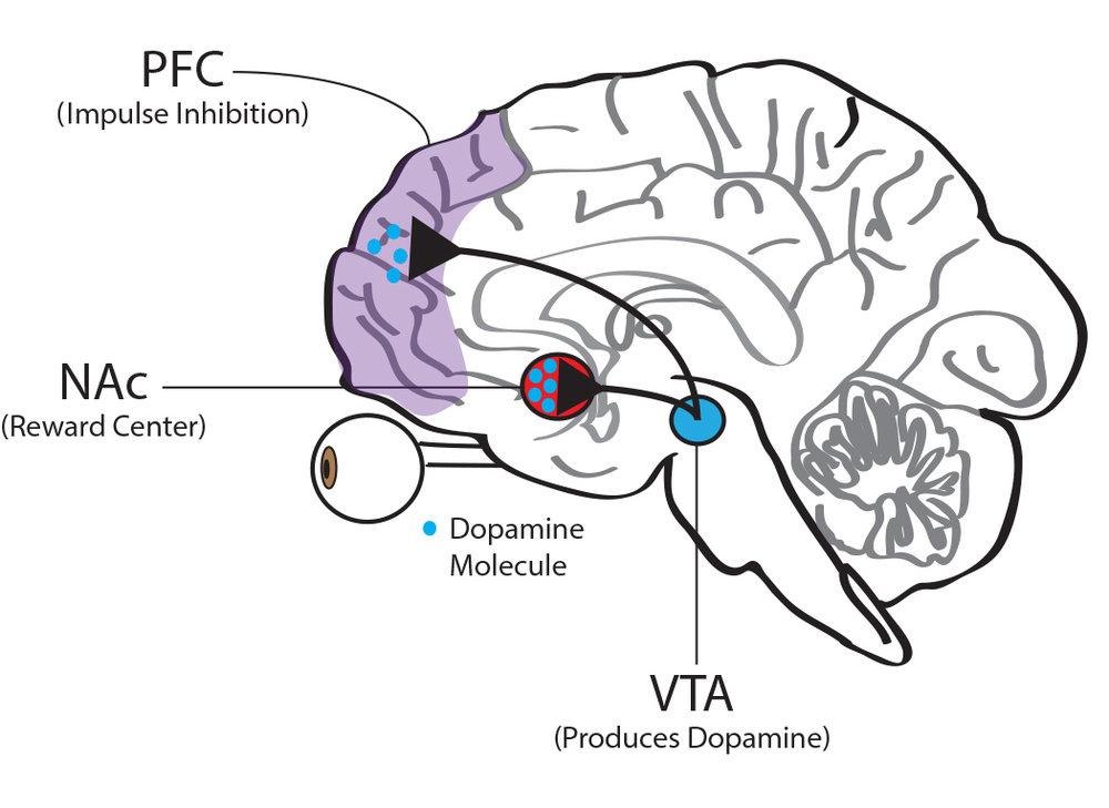 VTA NAc Stress3