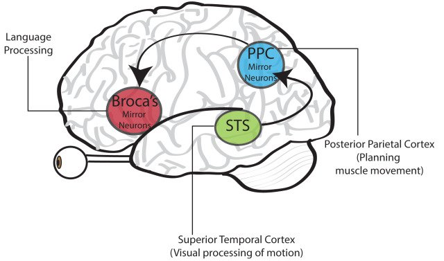 Mirror-Neurons-System-640x377.jpg