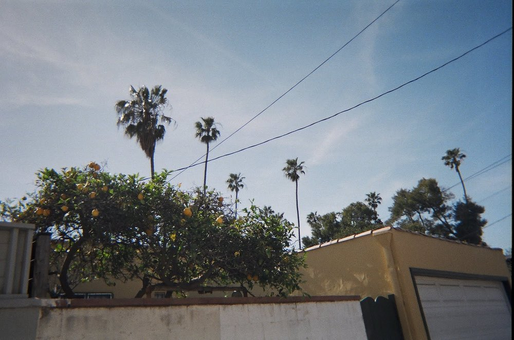"""This is a back-alley in Venice, I was in love with the palm trees and fruit trees everywhere."""
