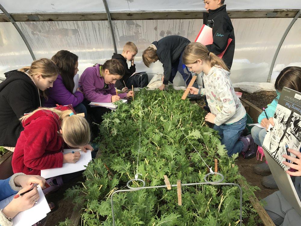 Botany in the Garden — Waldorf School of Cape cod