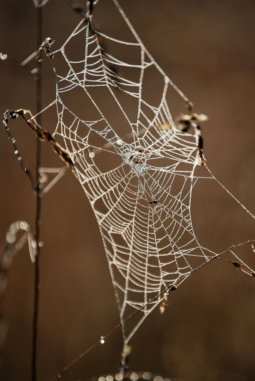 A spider weaves a web so it can catch its prey. Then, later, it eats it. Your ego does the same thing. Love it deeply. So it will let you go.     (Photograph by Tina FireWolf)