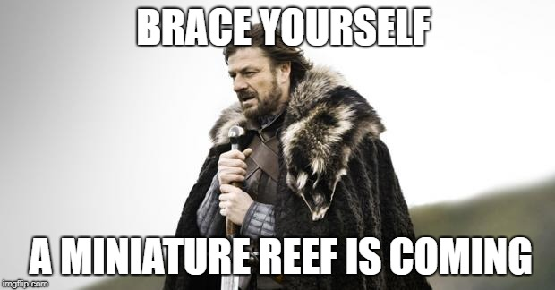 mini reef coming.jpg