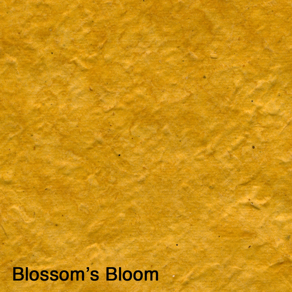 Blossom's Bloom.jpg