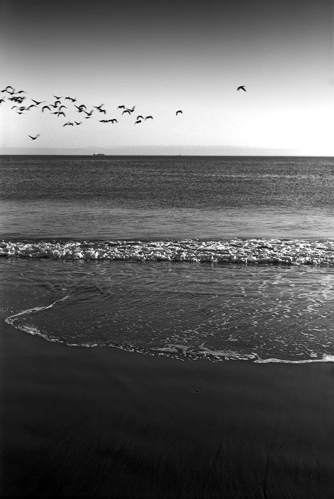 ocean-birds.jpg