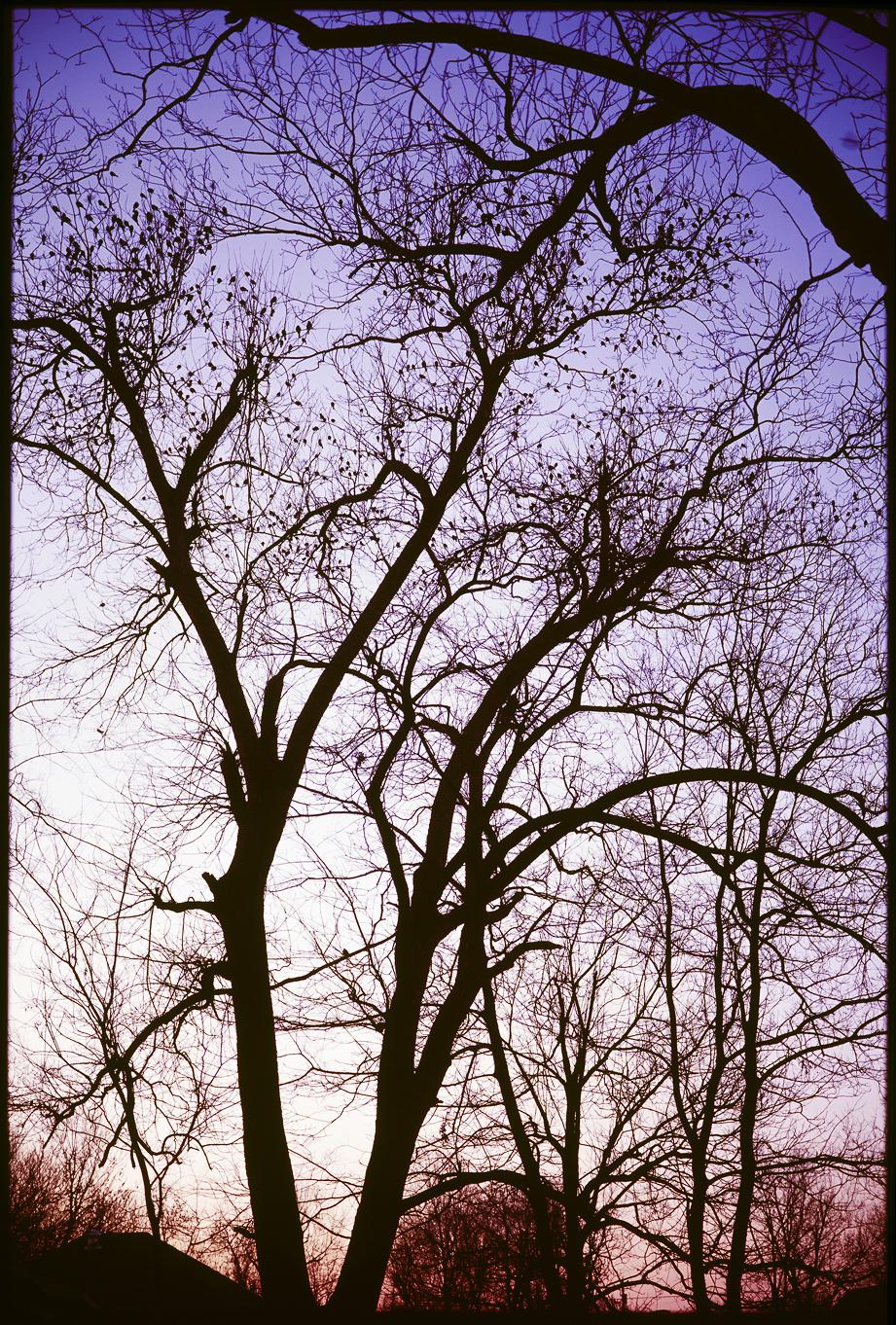 BirdMorningTrees-1400px.jpg