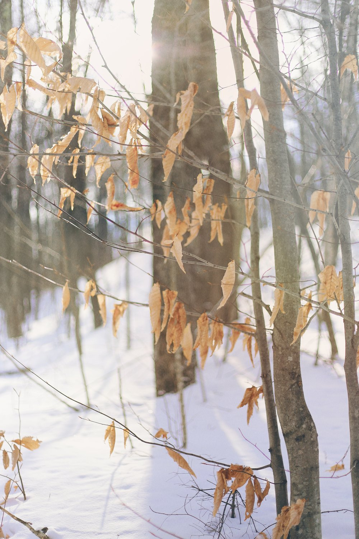 woods snow.JPG