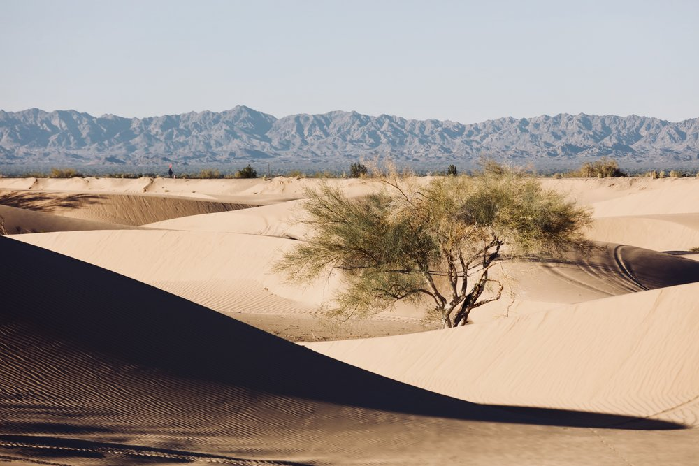 imperial sand dune CA.jpg