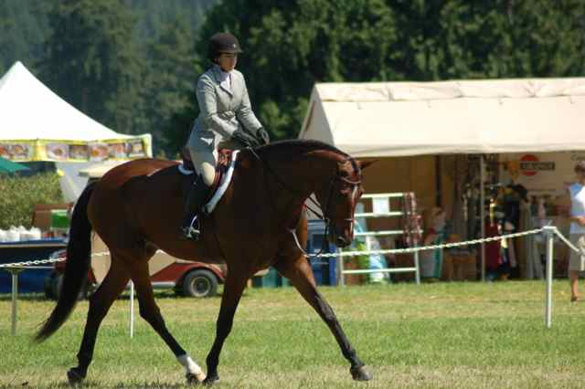 Archway Horse Shows010.jpg