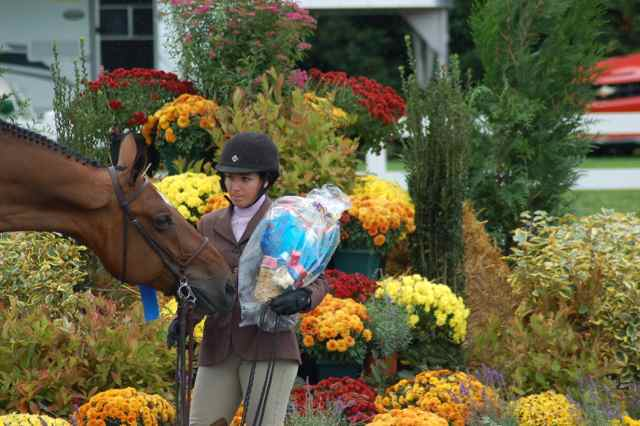 Archway Horse Shows012.jpg