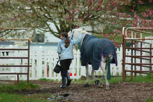 Archway Horse Shows023.jpg