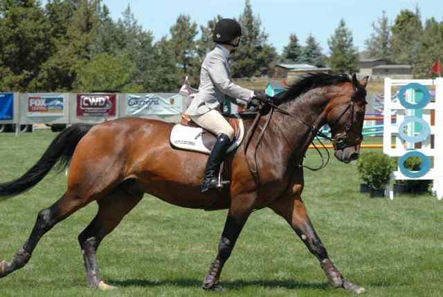 Archway Horse Shows031.jpg