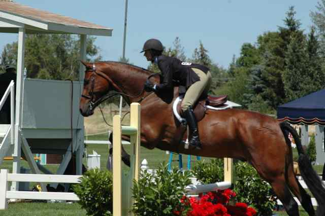 Archway Horse Shows032.jpg