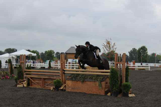 Archway Horse Shows056.jpg
