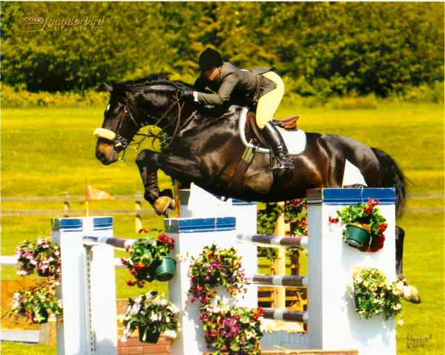 Archway Horse Shows059.jpg