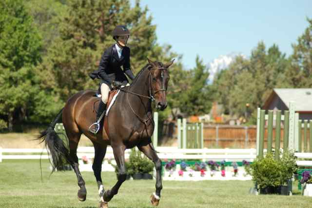 Archway Horse Shows082.jpg