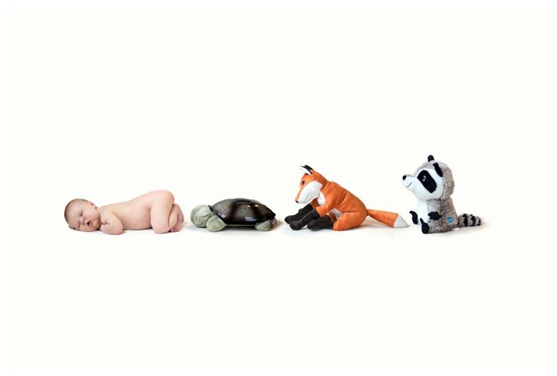 newborn baby animals forest friends fox turtle racoon.jpg
