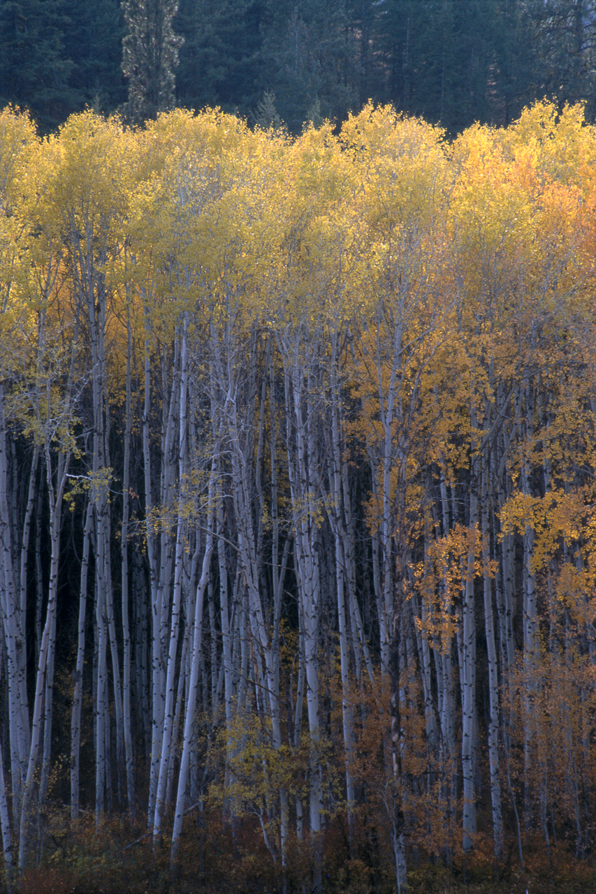 The Cascades 2