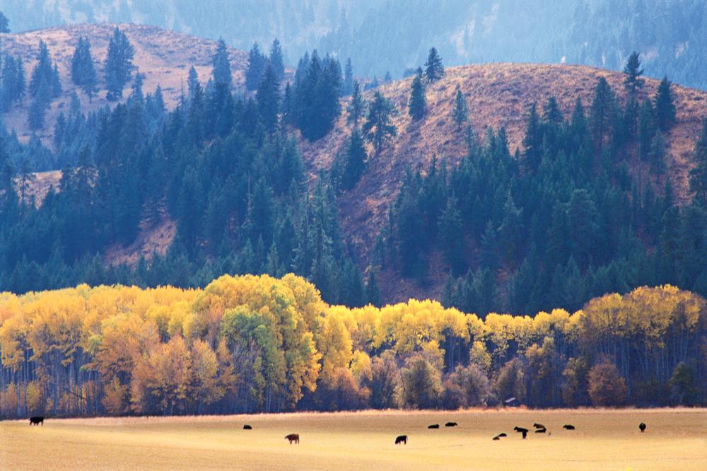 The Cascades 3