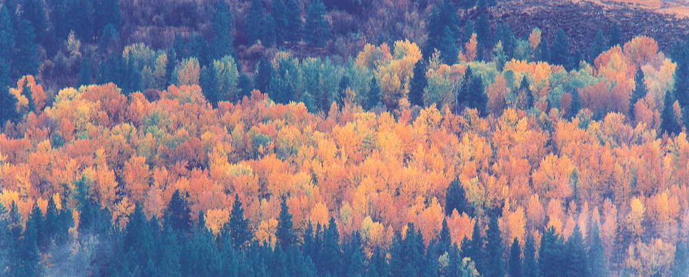 The Cascades 5
