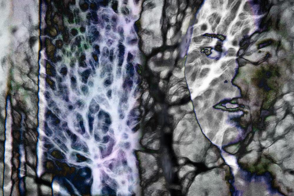 Neogenesis 14
