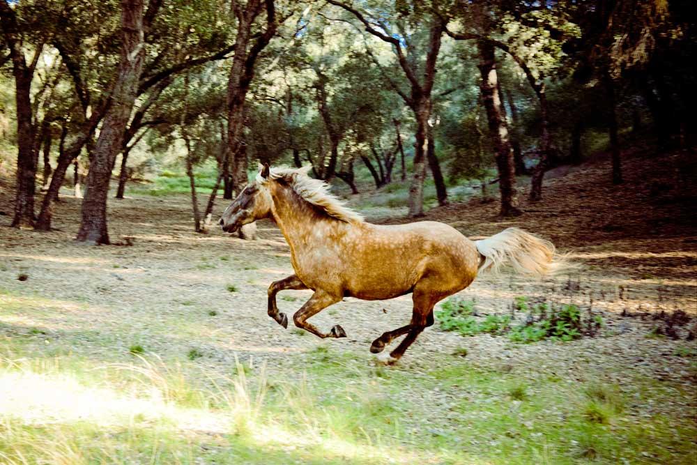 KOELLE-running-horse.jpg