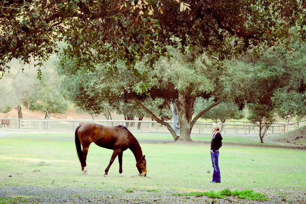 client-with-horse-in-pasture.jpg