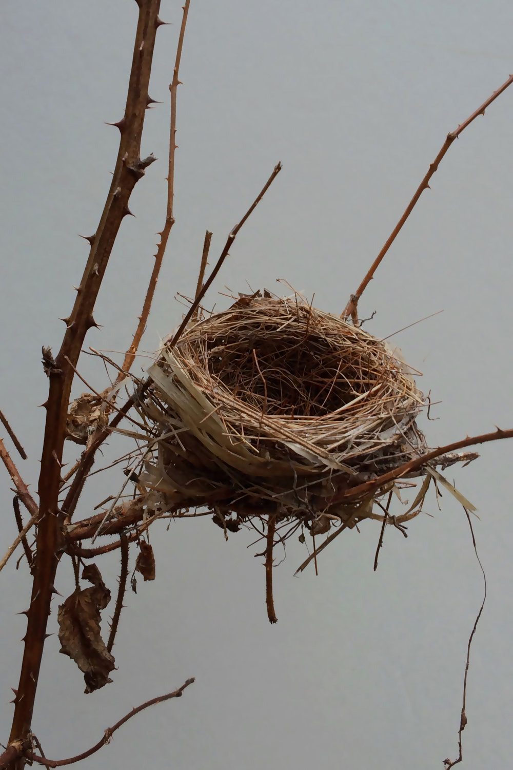 Bird Nest ART.jpg