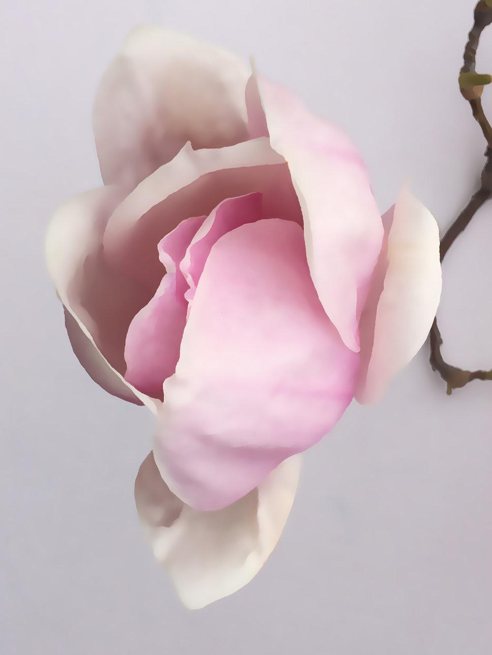 1 SPRING open magnolia copy.jpg