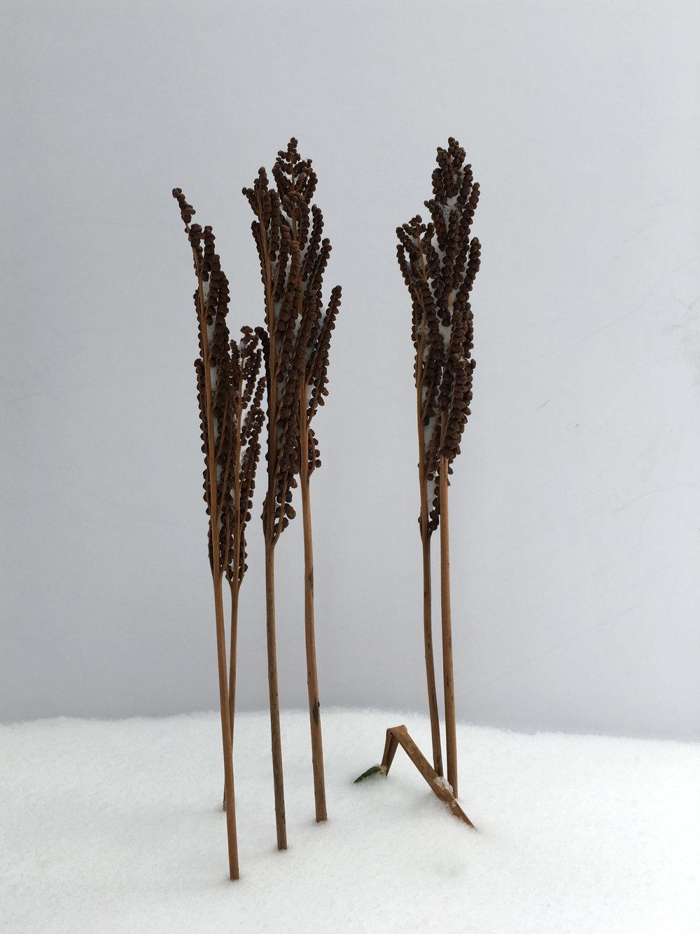 seed trees IMG_3368.jpg