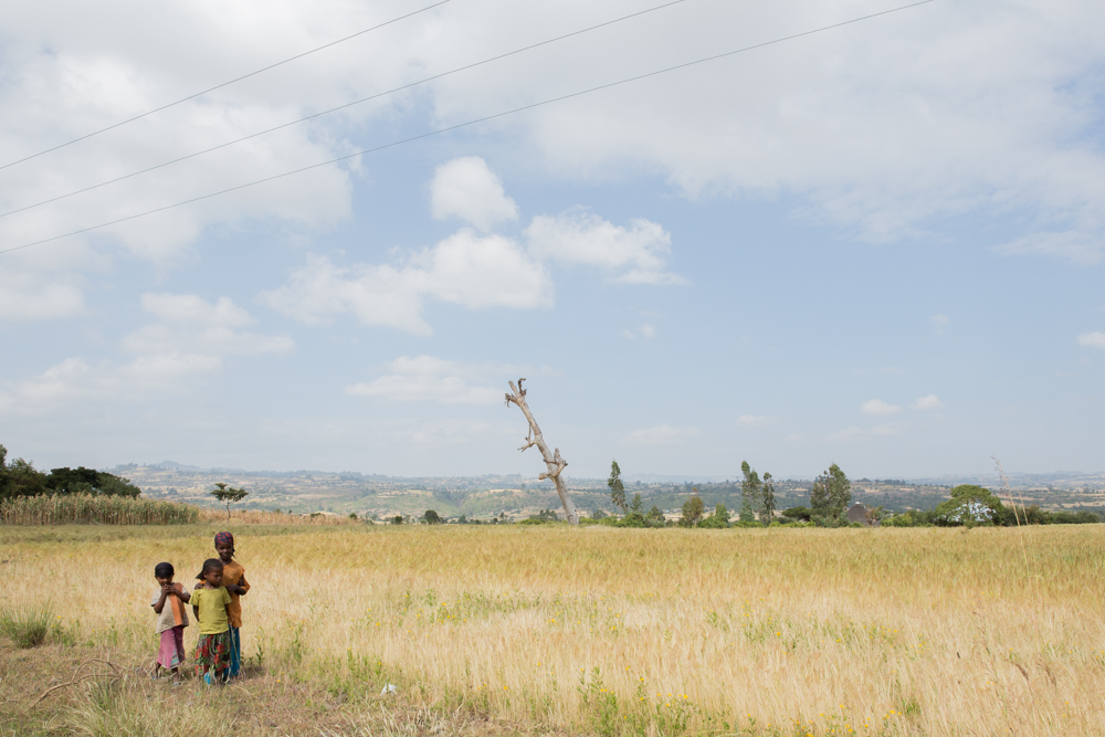 3 Ethiopian children in front of a field of Tef. Power lines in the air - the traditional countryside meeting the soon to come industrialization of this ancient country.
