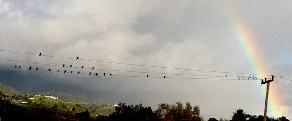rainbow_birds.JPG