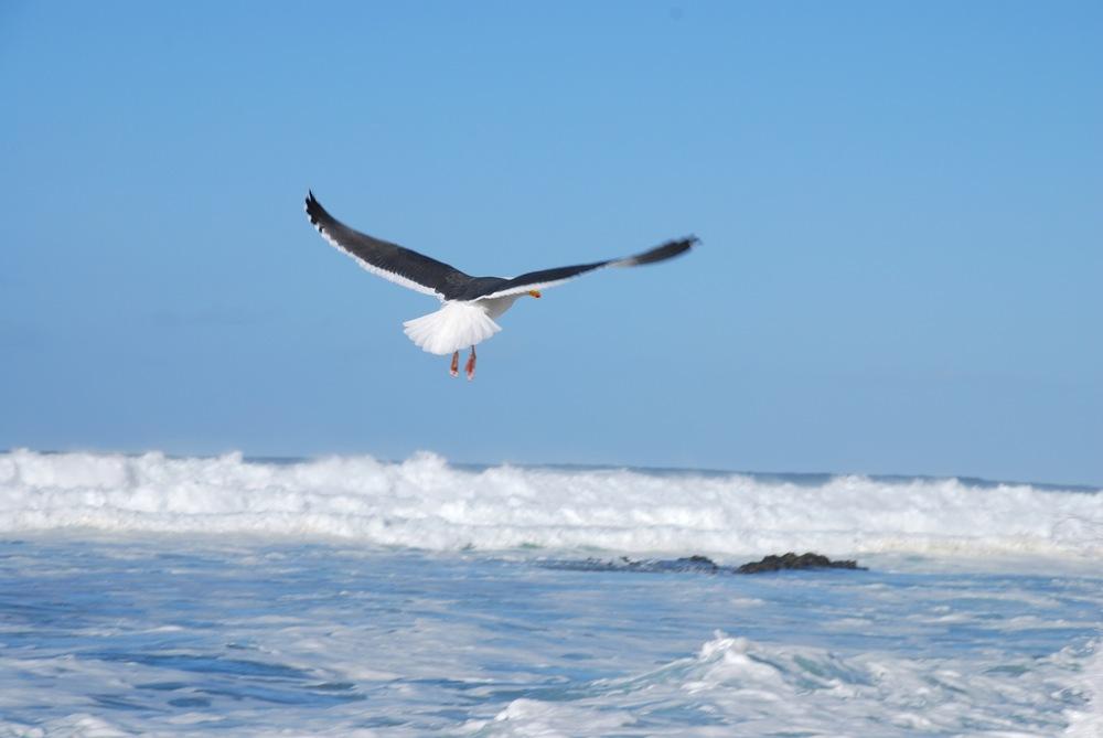 bird_in_flight.JPG