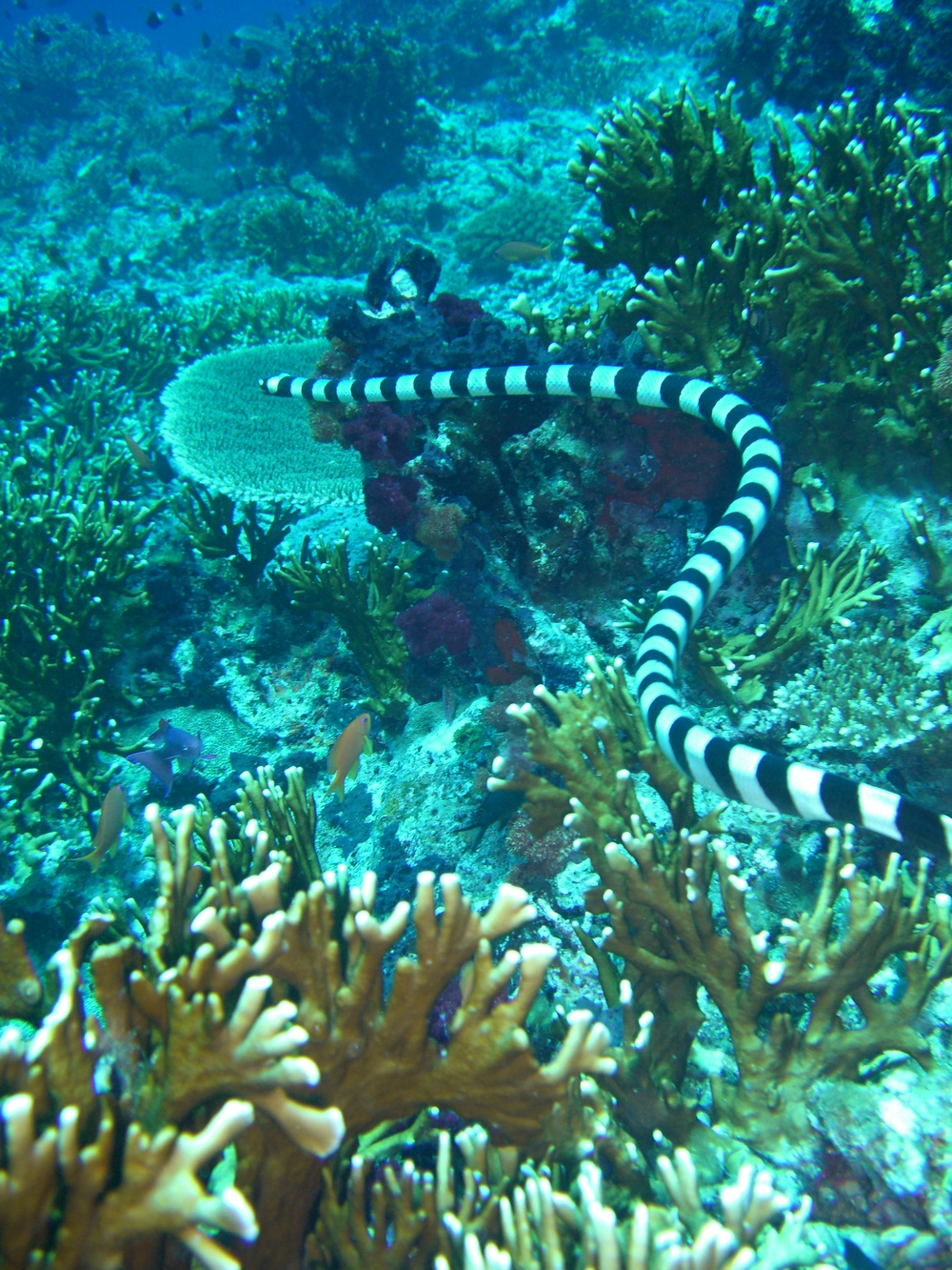 Fiji - all Greg's photos from Casio 322.jpg