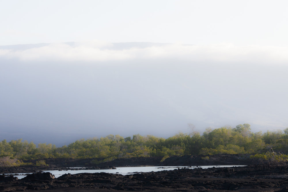 Galapagos2015-08-251496.jpg