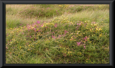 Irish Wildflowers in County Kerry