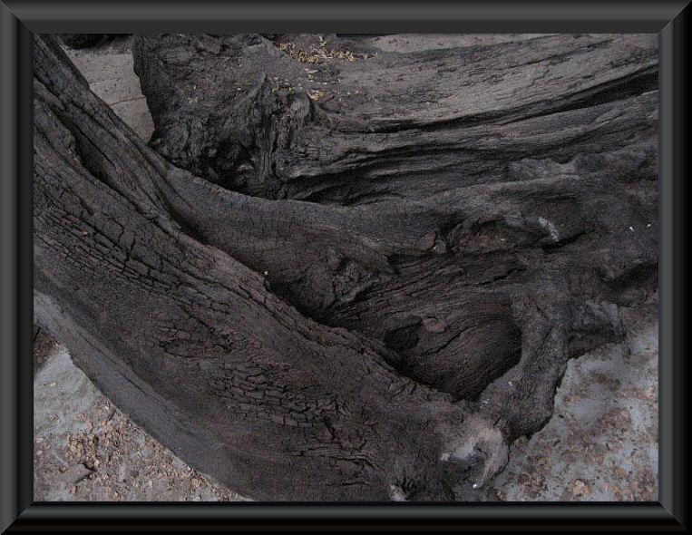 irish-bog-oak.jpg