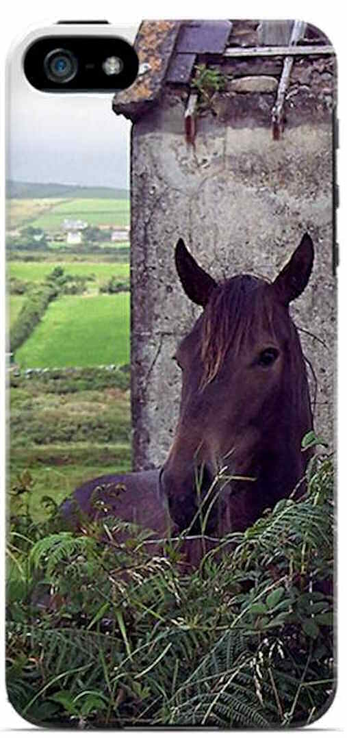 Kerry Horse and Barn
