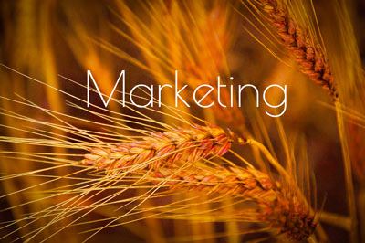 RedWinterWheatTrials_FrancesBuerkensMarketing-Marketing.jpg
