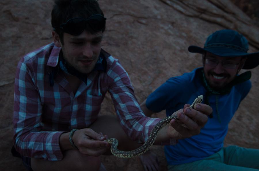 Will's birthday snake.
